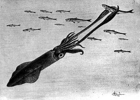 32739 squid