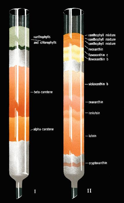 paper chromatography research paper