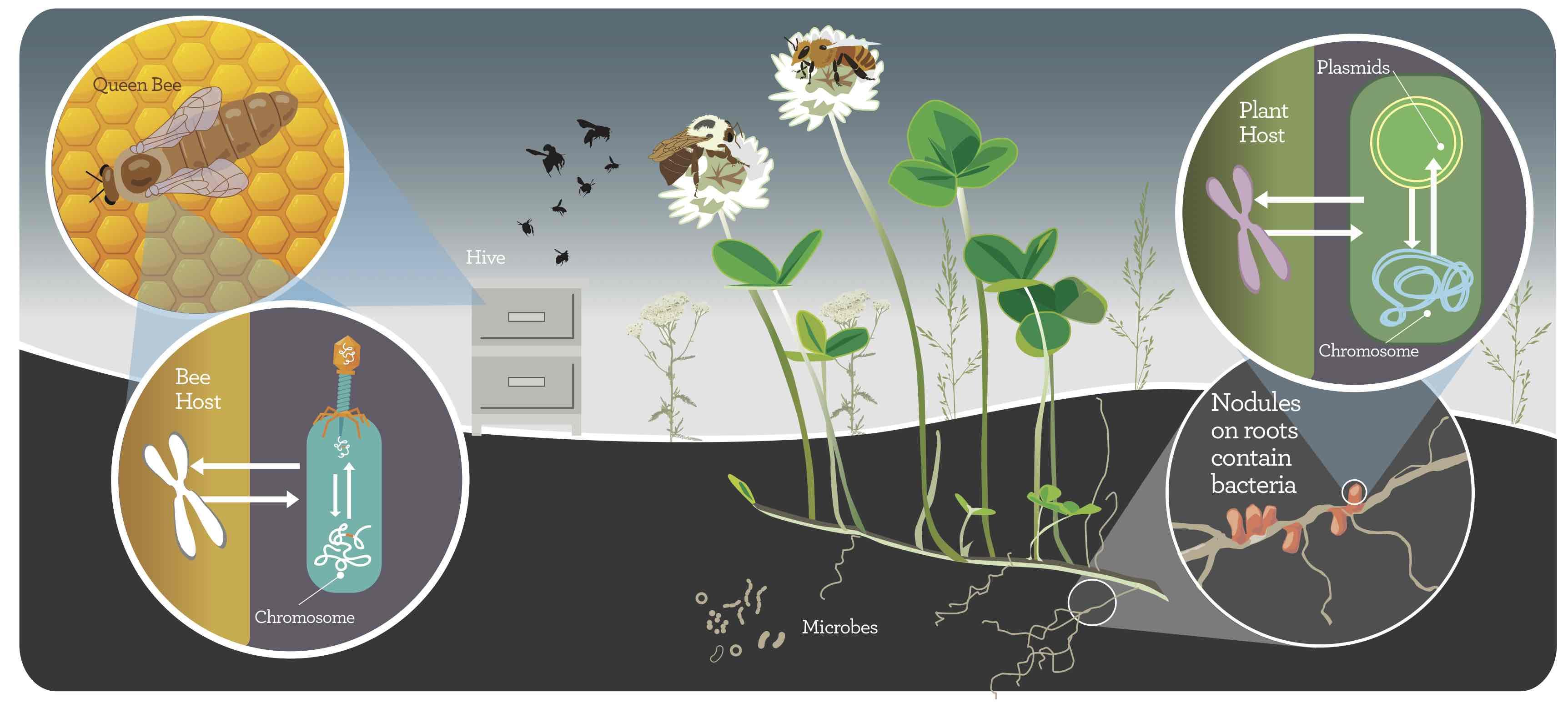 Symbiosis to reintegrate biology