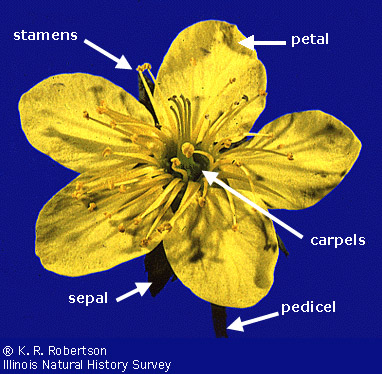 Flowers. 7-Flower terminology
