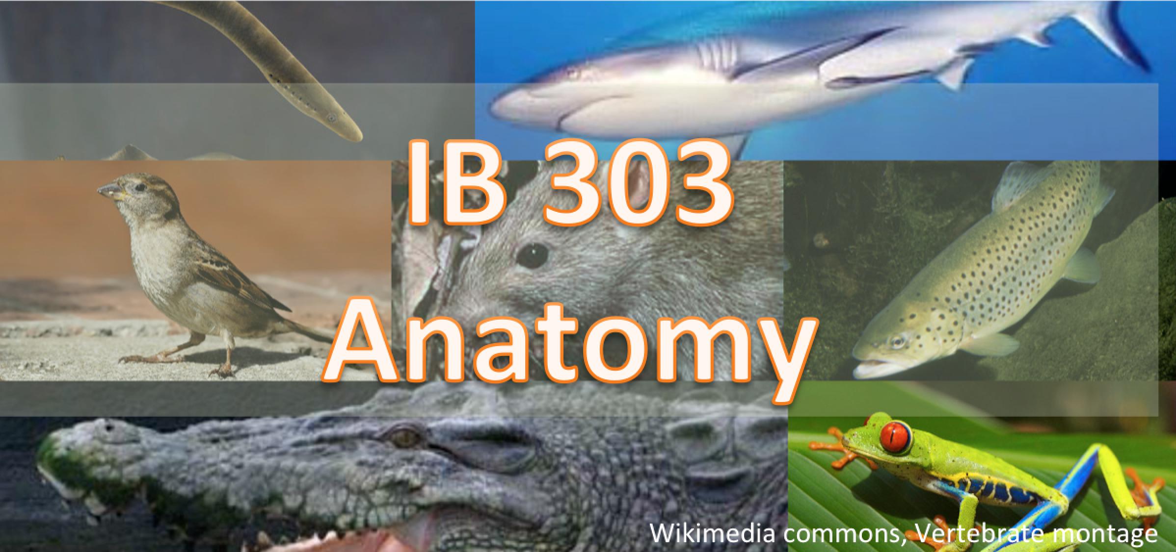 IB 303