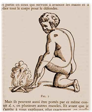Reflex from Trait de L'Homme